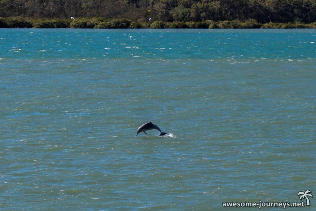 Australien_FraserIsland_Delfin