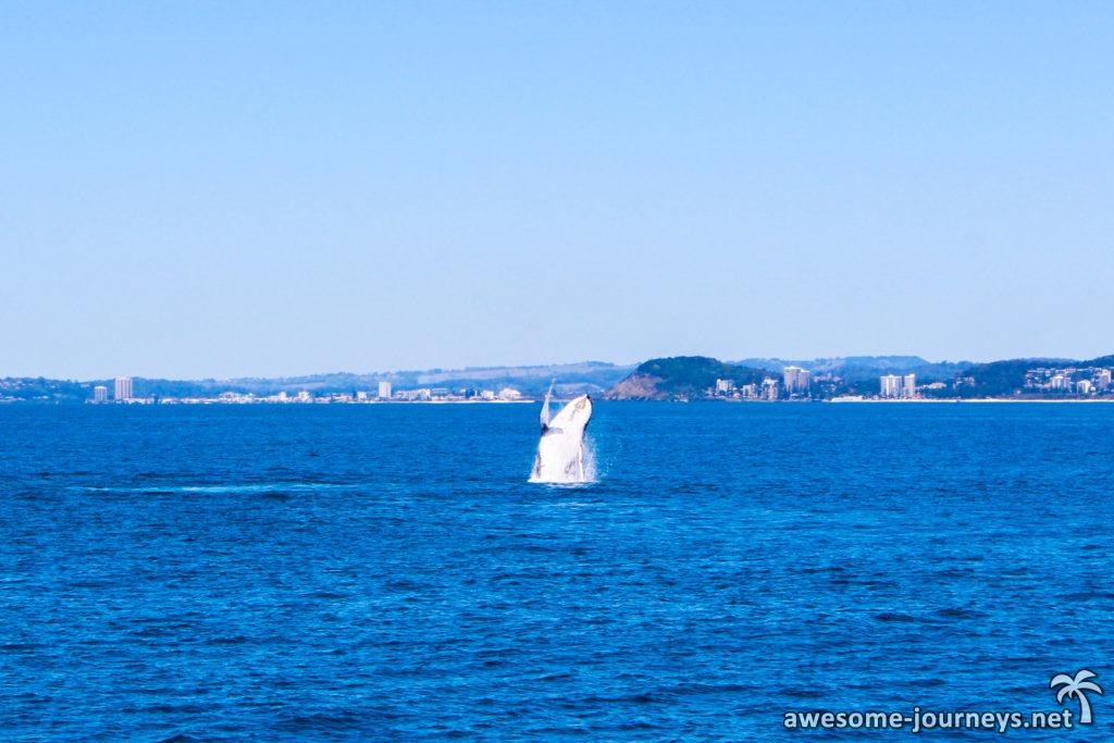 australien_goldcoast_whalewatching_3