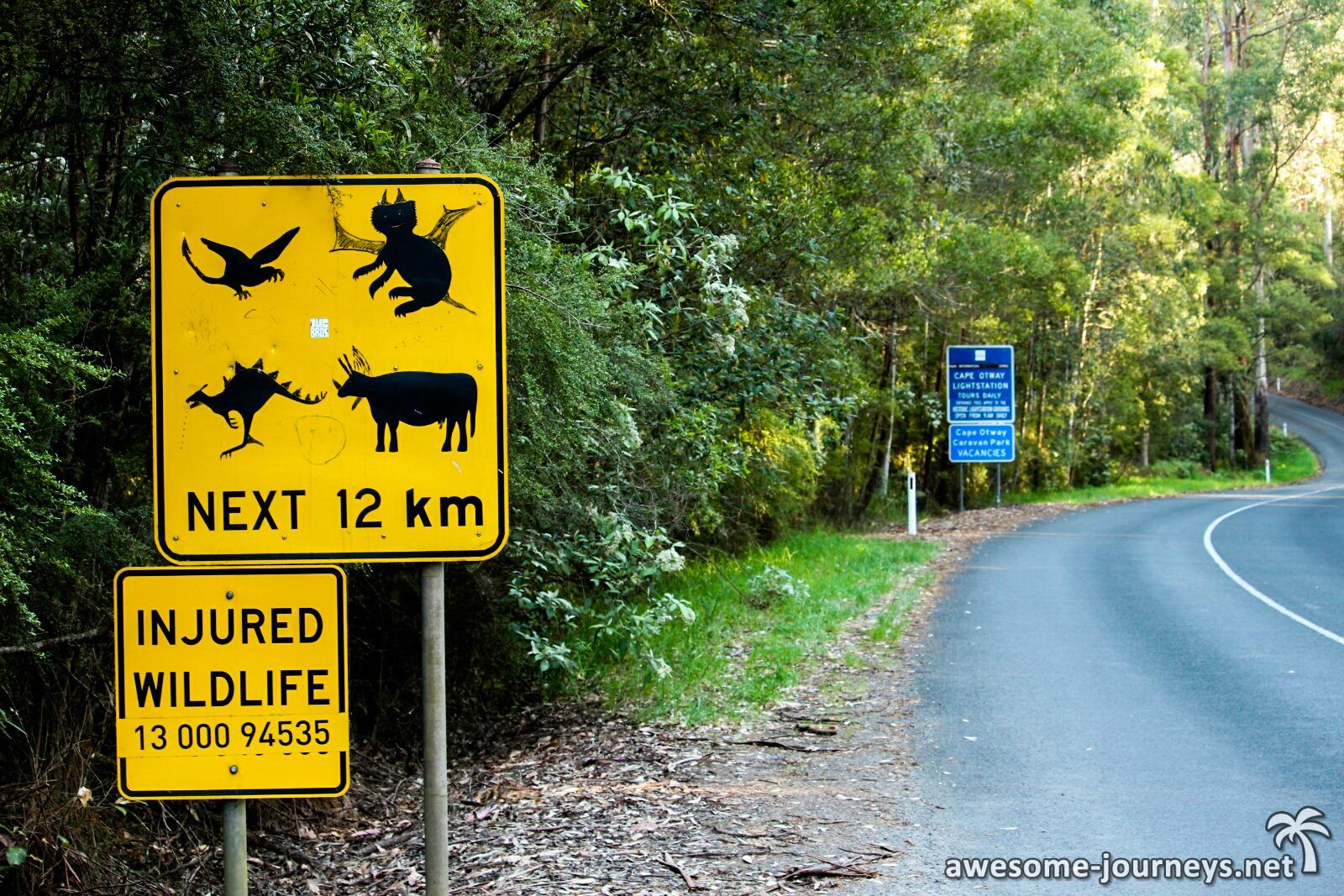 In Cape Otway scheint es viele wunderliche Tiere zu geben