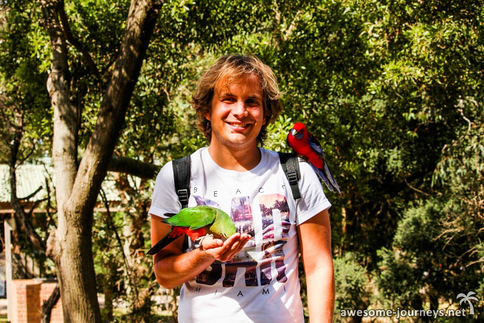 """Viele Papageien beim """"Koala Spotting Point"""""""