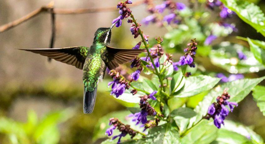 monteverde selvatura park kolibri schmetterling garten. Black Bedroom Furniture Sets. Home Design Ideas