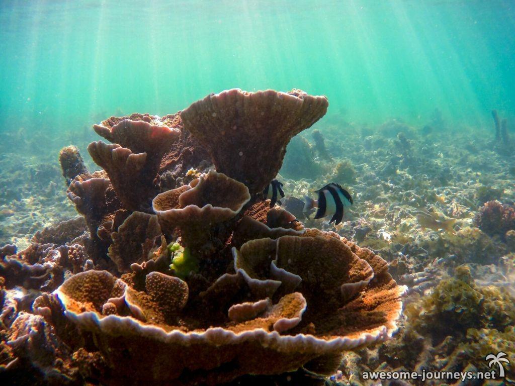 Unterwasserwelt von Pereybere