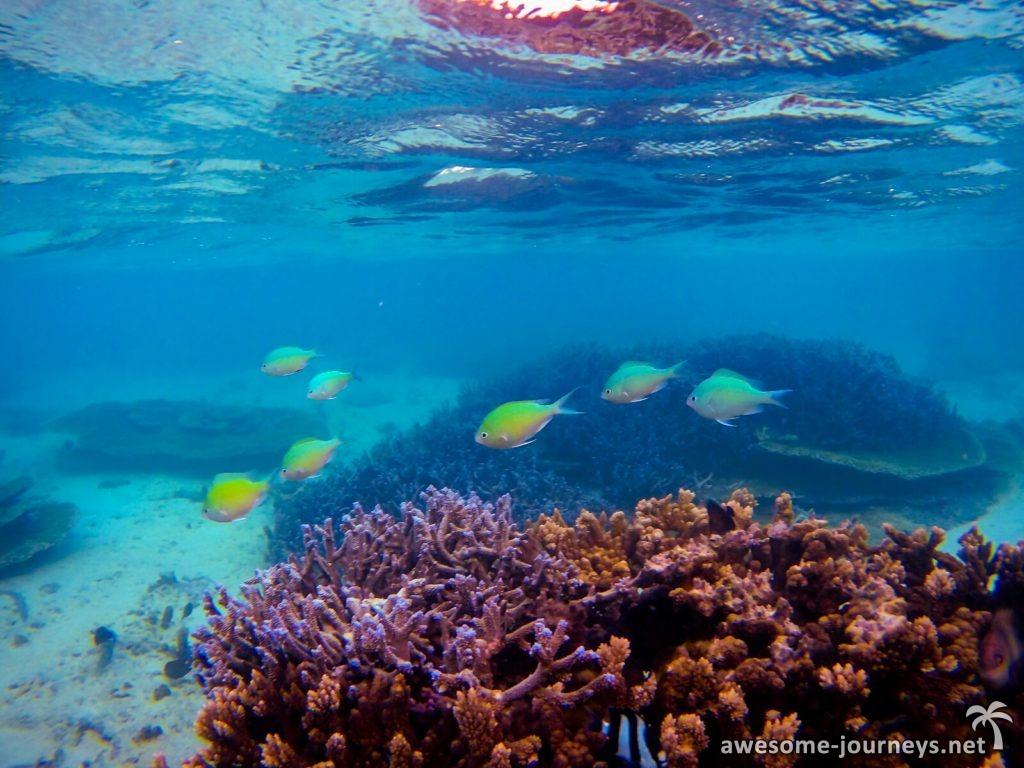 mauritius_blue-blay_snorkeling_2