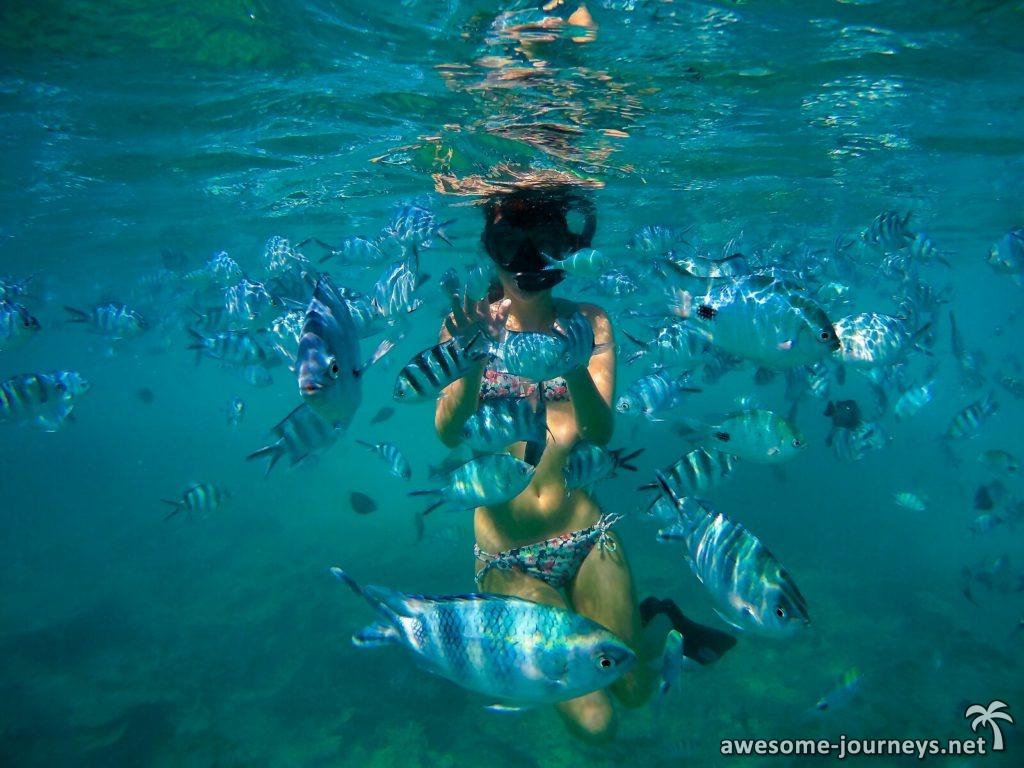 mauritius_bluebay-marinepark-1