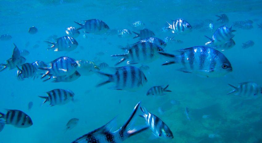 mauritius_bluebay-marinepark-2