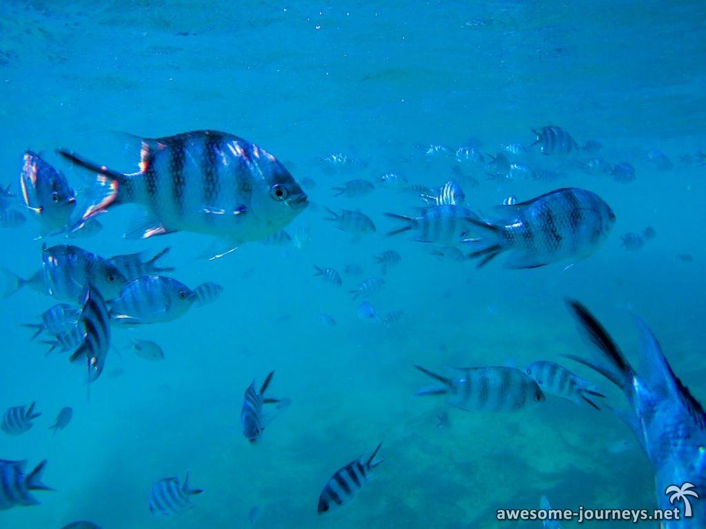 Mitten im Fischschwarm