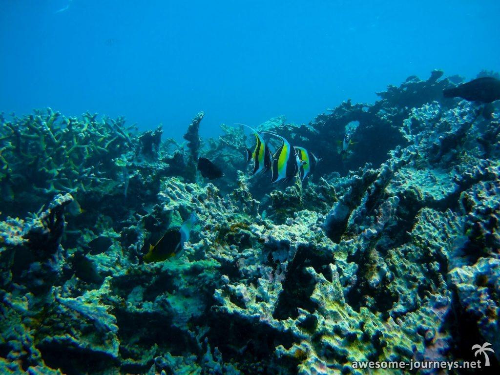 Korallenwüste im Blue Bay Marine Park