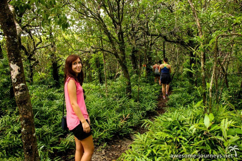 Mitten durch den Dschungel