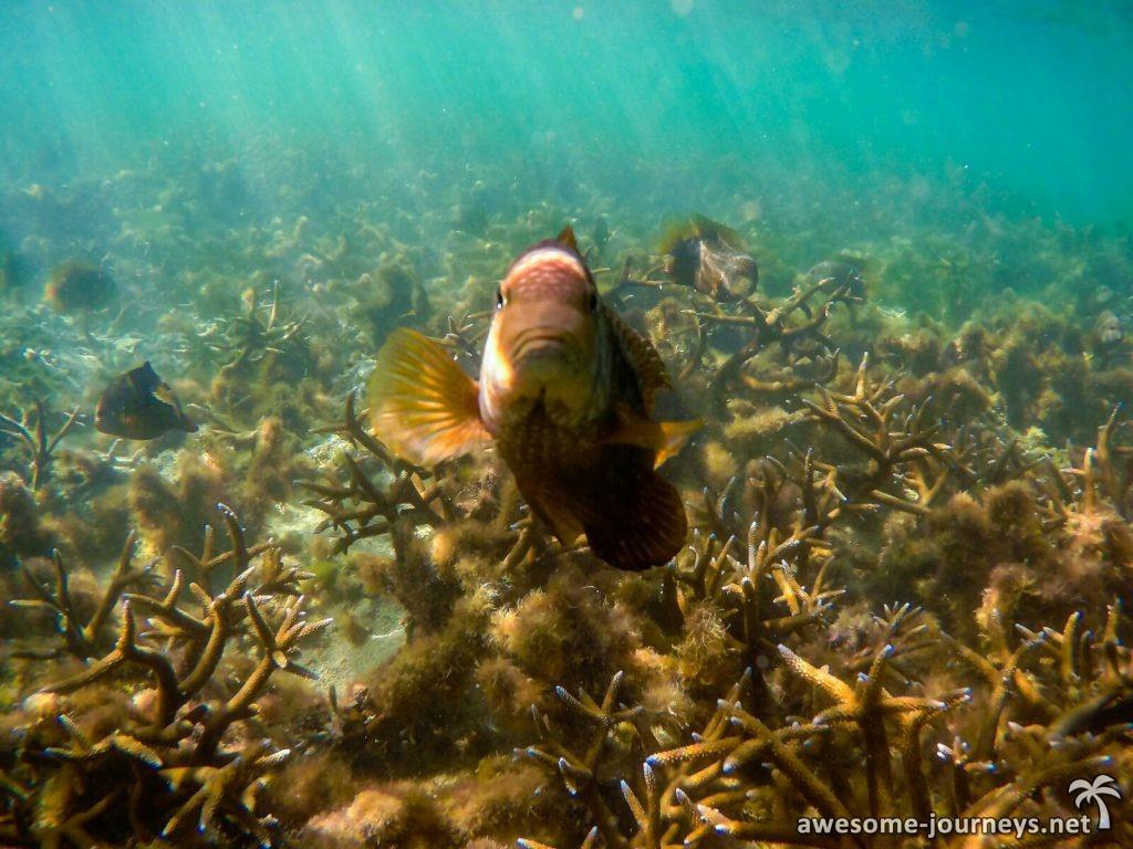 mauritius_ile-aux-cerfs_snorkeling_2