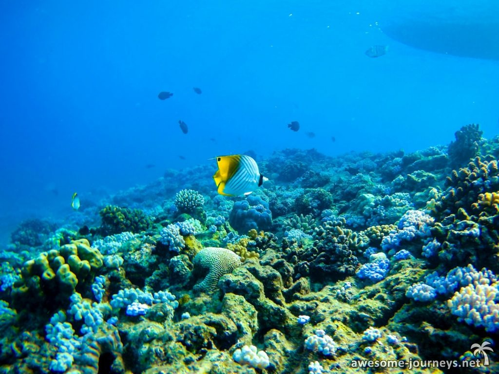 mauritius_northern-islands_snorkeling_4