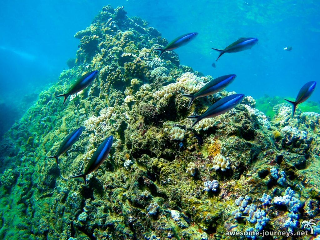 mauritius_northern-islands_snorkeling_5