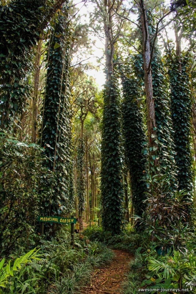 mauritius_sightseeing_sophie-nature-walk_1