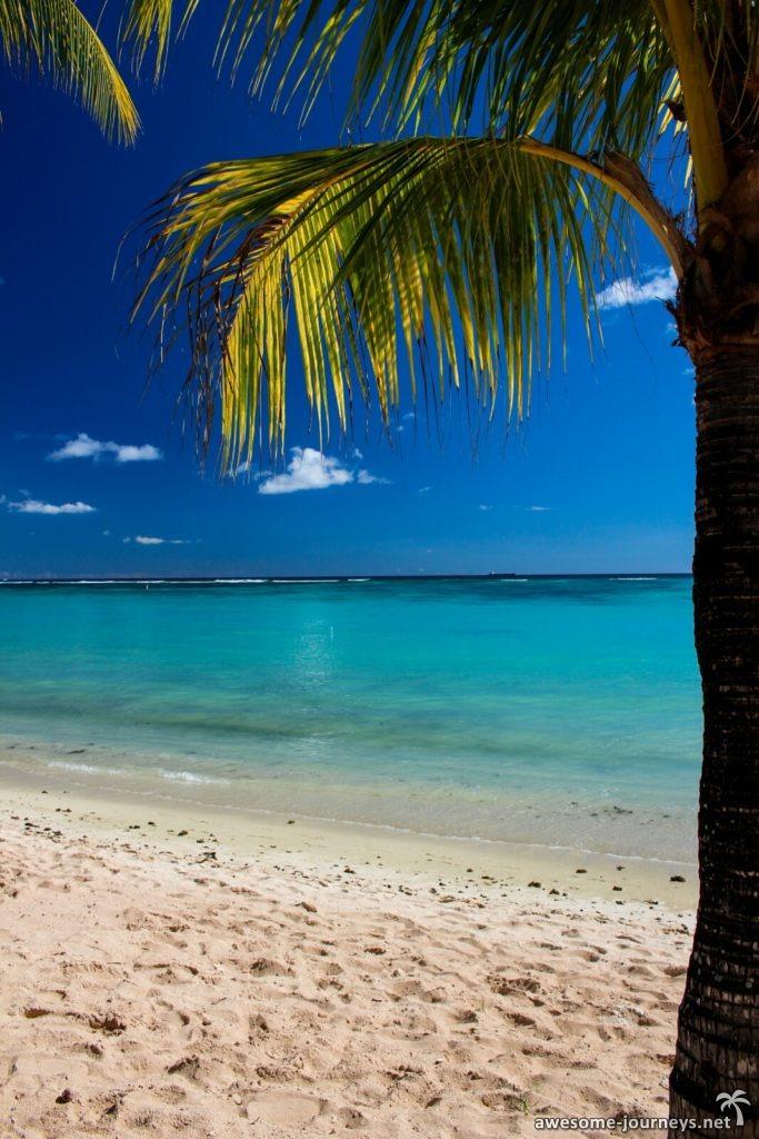 mauritius_trou-aux-biches_palmtree