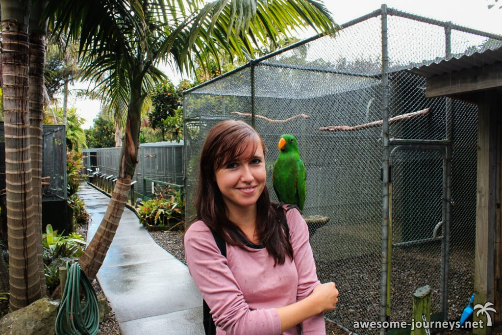 neuseeland_northland_parrot-place