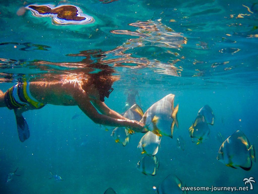 Schnorcheln mit Fledermausfischen