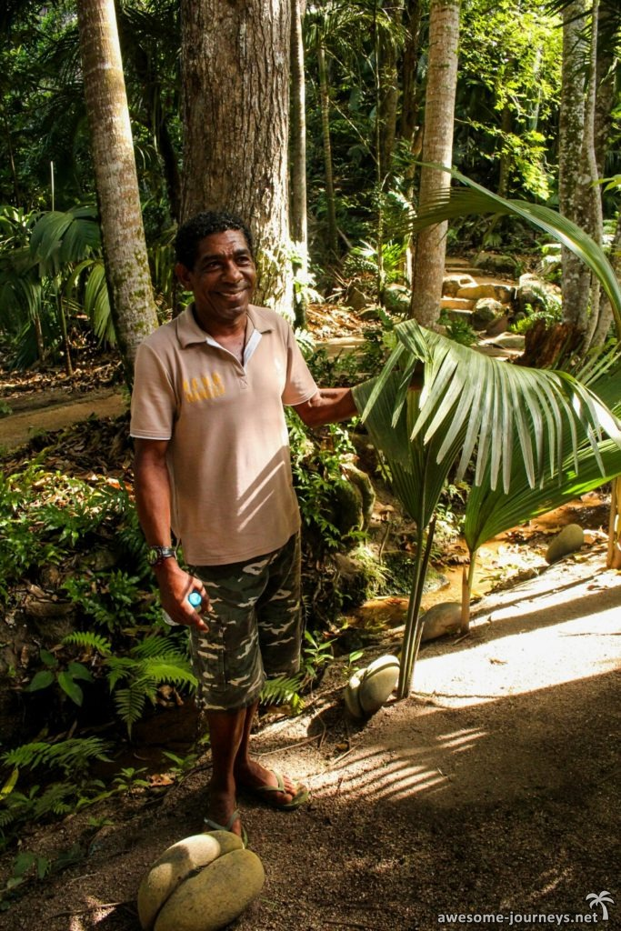 seychelles_fond-ferdinand_coco-de-mer_3