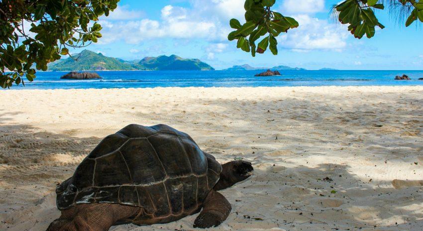 seychelles_la-digue_giant-tortoise_2