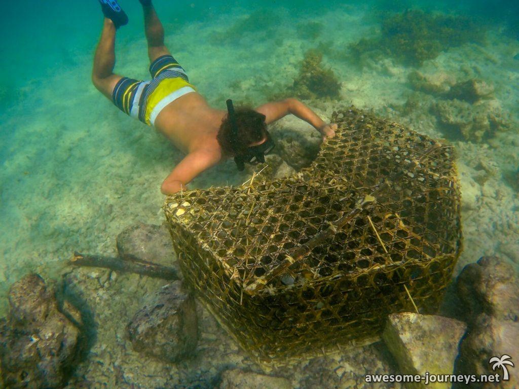 seychelles_la-digue_snorkeling_2