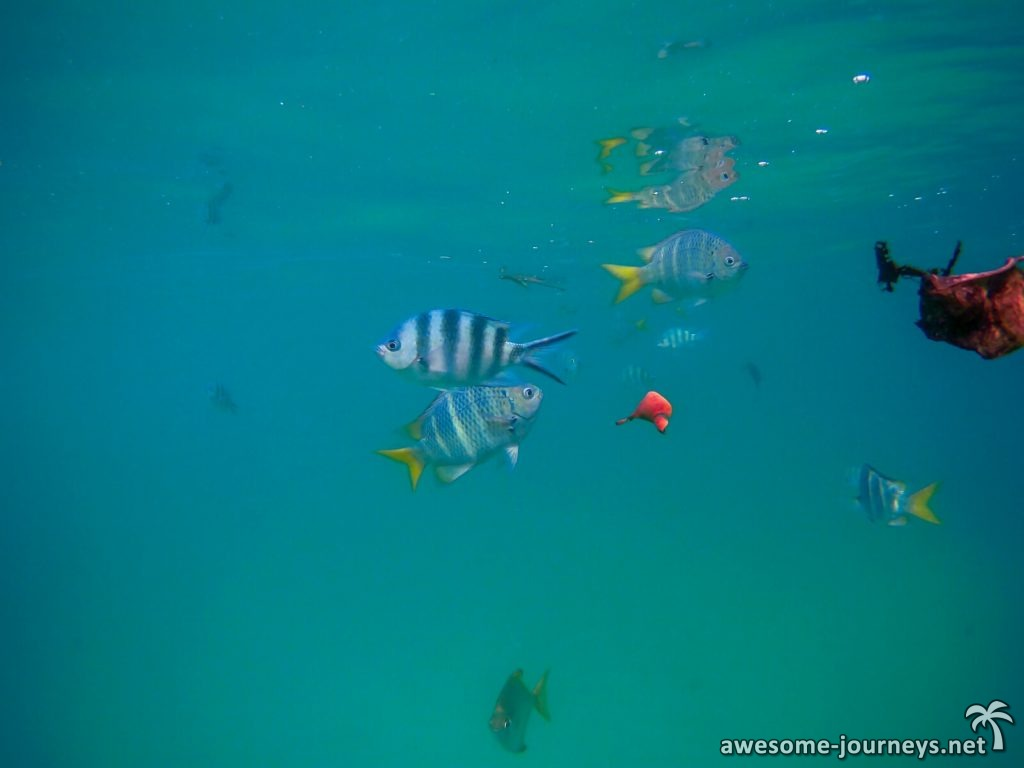seychelles_mahe_sunset-beach-snorkeling_2