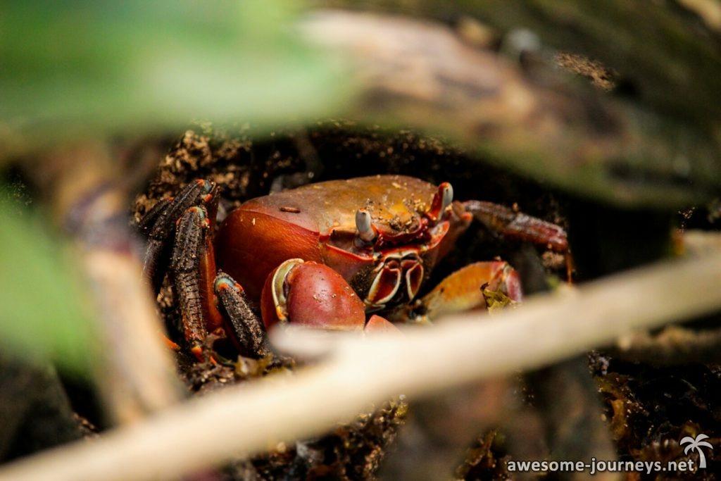 Krabben in Hülle und Fülle