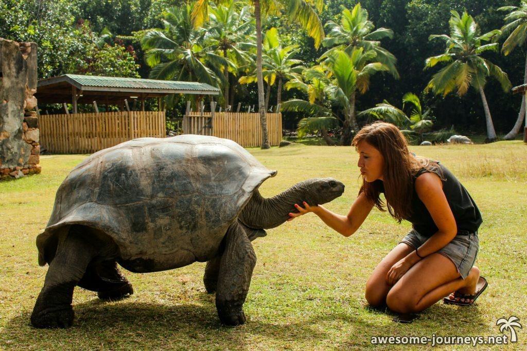 seychelles_ziblo-boat_curieuse-giant-tortoise_4