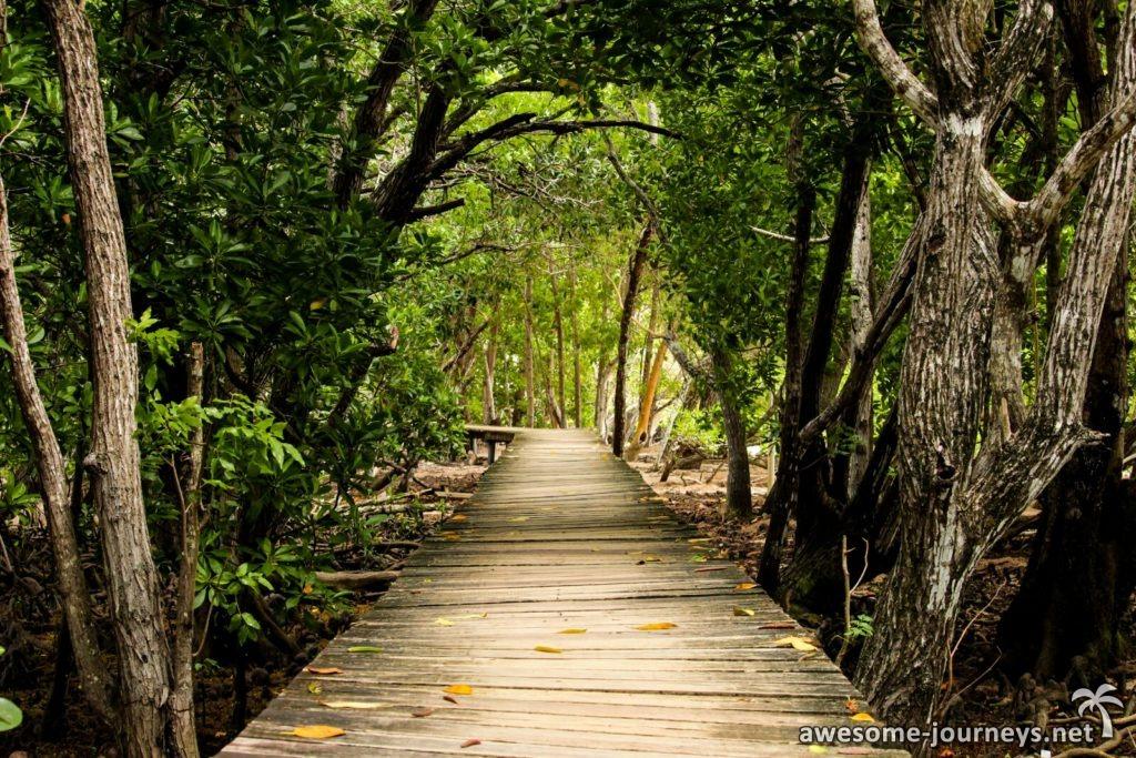 Boardwalk durch die Mangroven