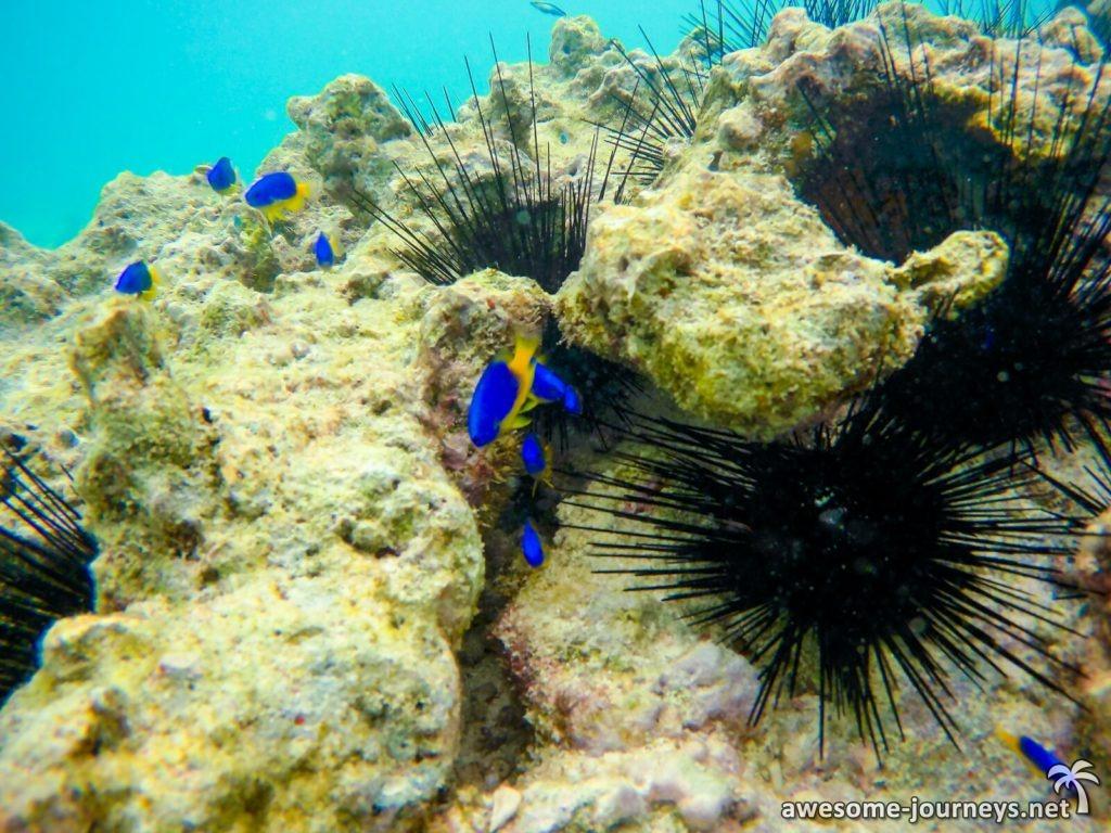 seychelles_ziblo-boat_snorkeling-st-pierre_5