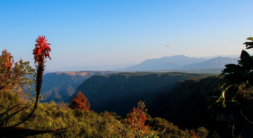 south-africa_panorama-route_gods-window-rainforest3