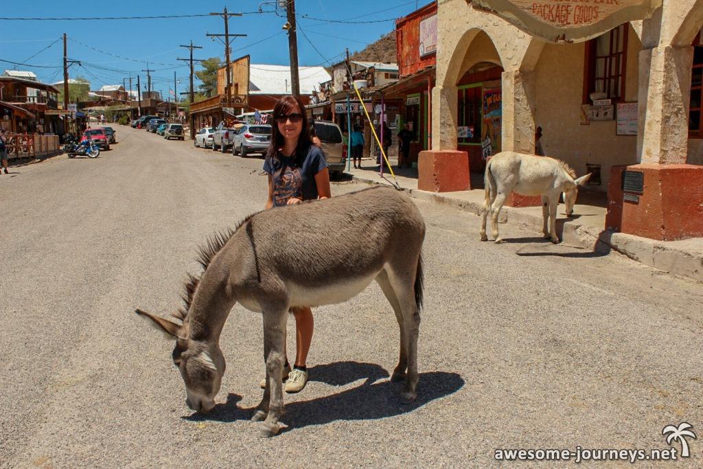 Frei herumlaufende Esel in Oatman